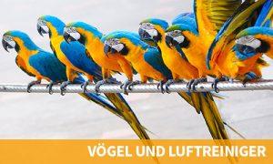 vögel-und-luftreiniger